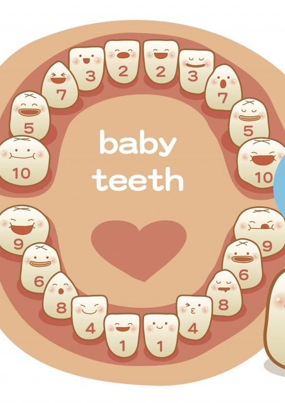 ¿Cuándo le saldrán los dientes a mi bebé?